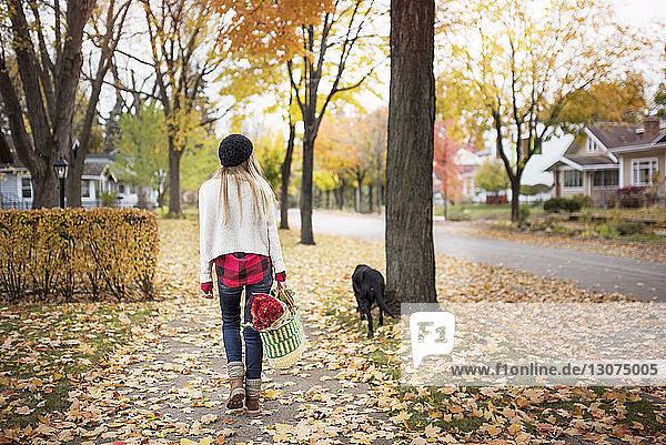 Rückansicht einer Frau  die eine Einkaufstasche in der Hand hält und mit einem Hund auf einem Fußweg spazieren geht