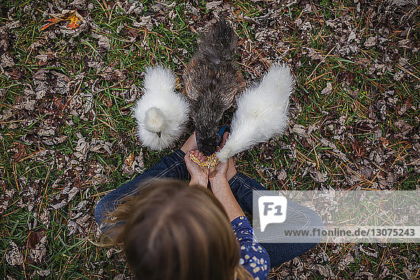 Overhead view of girl feeding baby chickens while sitting on field at farm