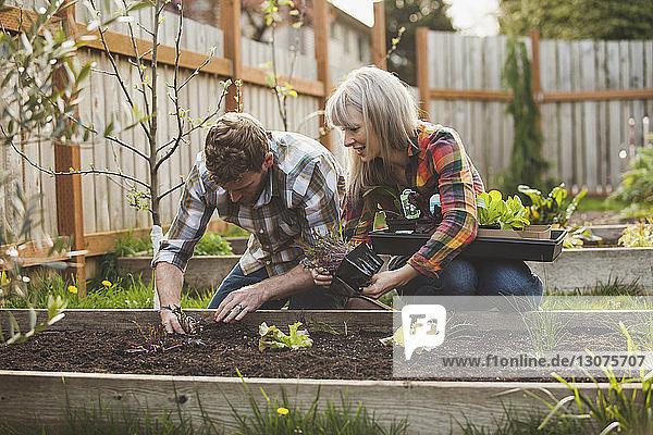Paarbepflanzung in Hochbeet im Hinterhof