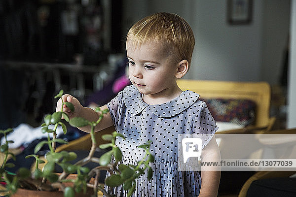 Cute girl playing with potted plant at home