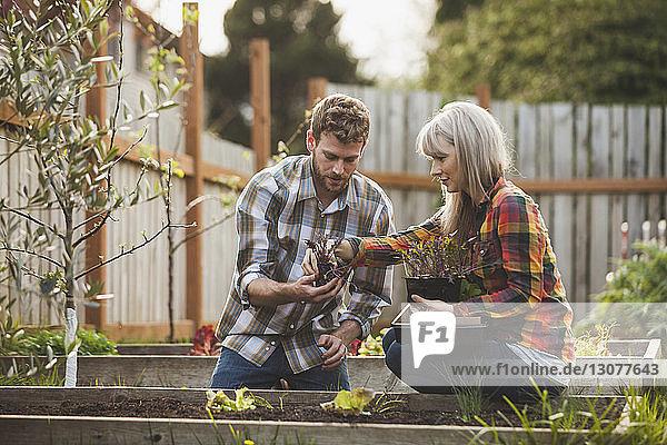 Frau hilft Mann beim Pflanzen im Hochbeet im Hinterhof
