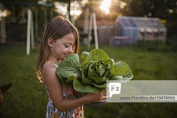 Girl looking at lettuce while carrying in bowl at backyard