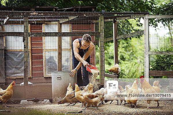 Farmer feeding hens in animal pen