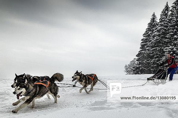 Mensch mit Hundeschlitten auf verschneitem Feld gegen den Himmel