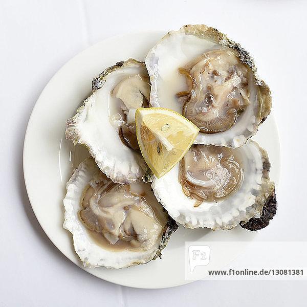Draufsicht auf Austern mit Zitronenscheibe im Teller auf weißem Tisch