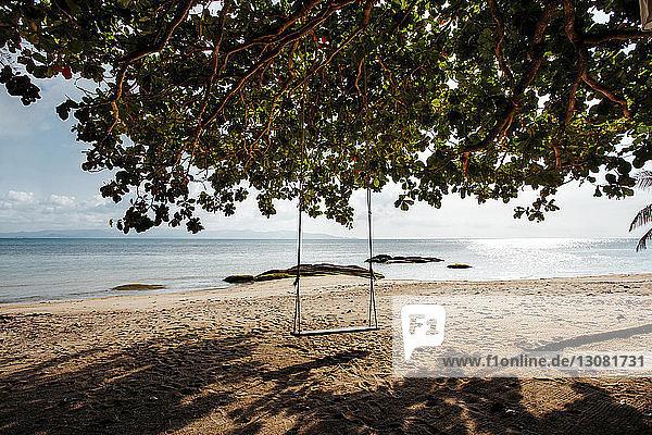 Leere Schaukel am Baum am Strand gegen den Himmel am sonnigen Tag
