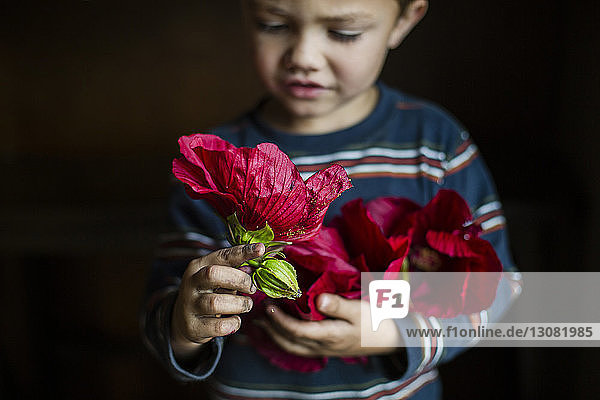 Close-up of boy looking at red flower while standing in room
