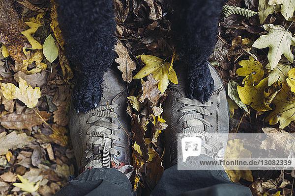 Niedrige Sektion von Mensch und Hund auf Herbstlaub im Wald stehend