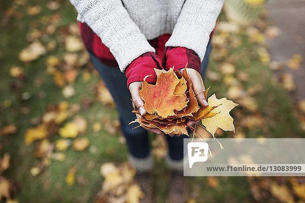 Hochwinkelansicht einer Frau  die Herbstblätter auf dem Feld hält