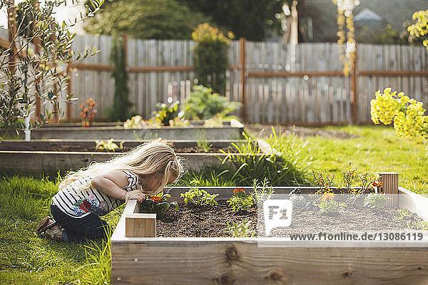Seitenansicht eines Mädchens mit Pflanzen  die im Hochbeet im Hinterhof wachsen