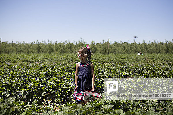Girl looking away while standing on strawberry farm against clear sky