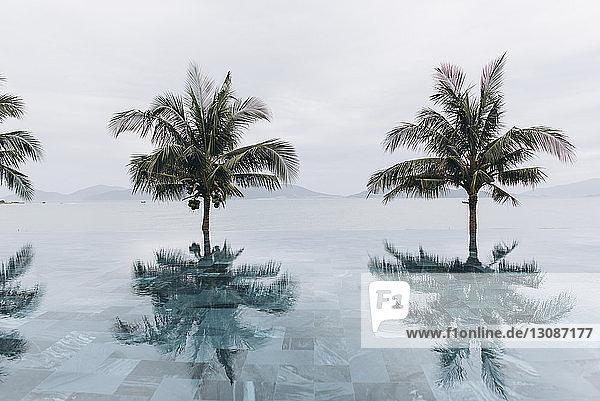 Kokosnusspalmen spiegeln sich im unendlichen Pool gegen den klaren Himmel