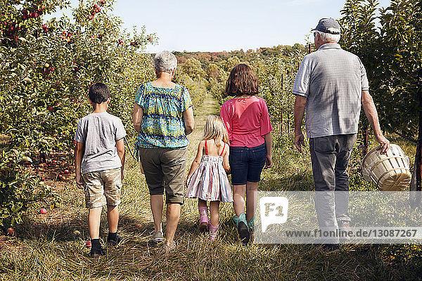 Rückansicht einer Familie  die auf dem Feld im Obstgarten spazieren geht
