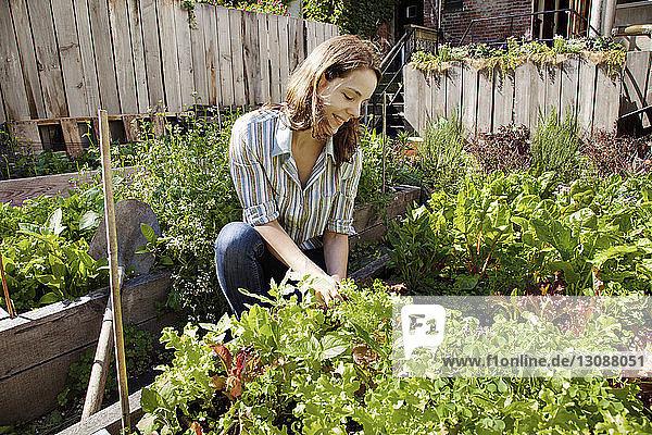 Frau pflanzt im Hof