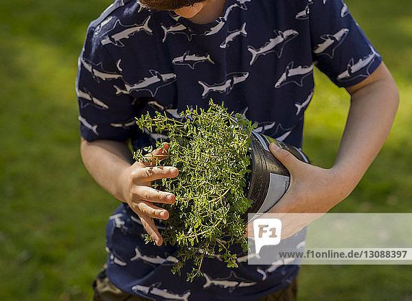 Boy examining potted plant while gardening at backyard