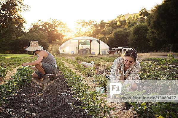 Bäuerinnen und Bauern  die im landwirtschaftlichen Bereich arbeiten