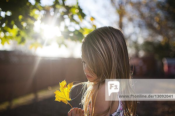 Girl looking at maple leaf in backyard on sunny day