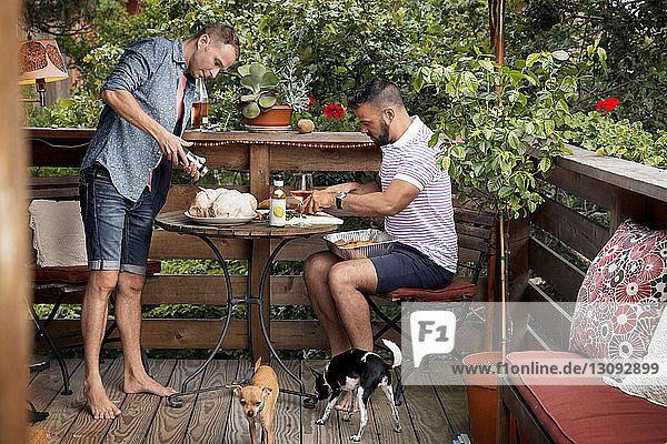 Homosexuelles Paar bereitet mit Chihuahuas Hühnchen auf dem Balkon zu
