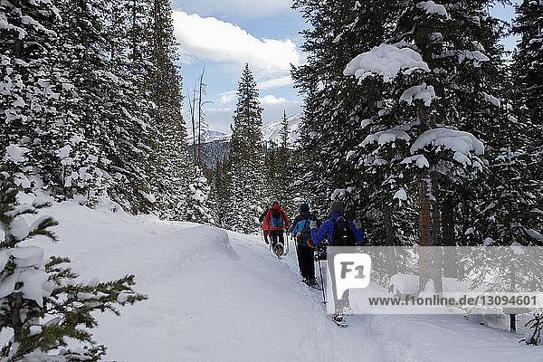 Rückansicht von Wanderern  die auf einem schneebedeckten Feld im Wald wandern