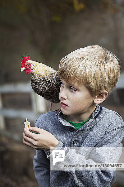 Boy feeding chicken