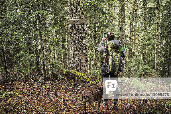 Rear view of woman photographing tree in forest while hiking with dog
