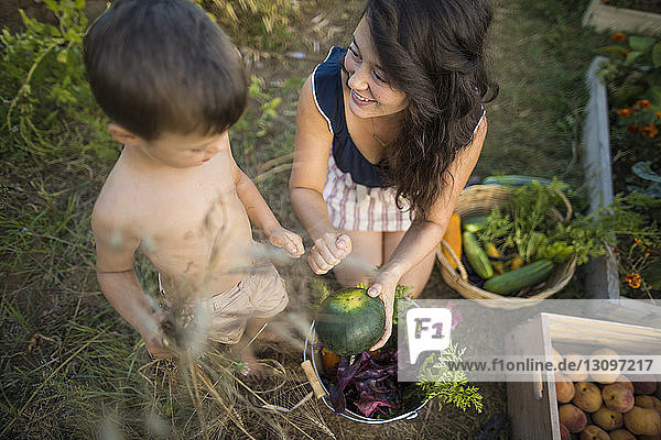 High angle view of mother showing vegetable to shirtless son at community garden