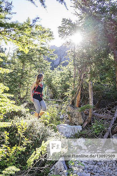 Wanderin wandert im Wald des North Cascades Nationalparks