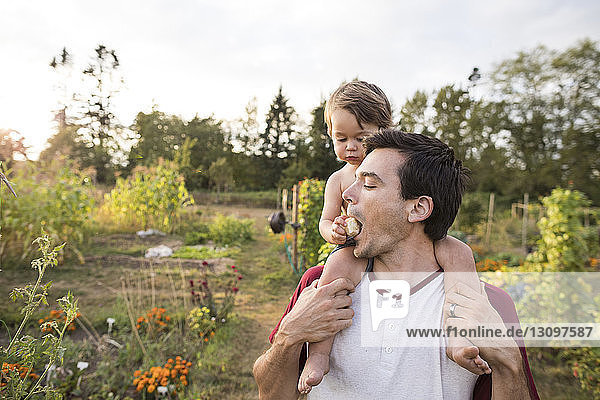 Son feeding fruit to father while sitting on his shoulder at community garden