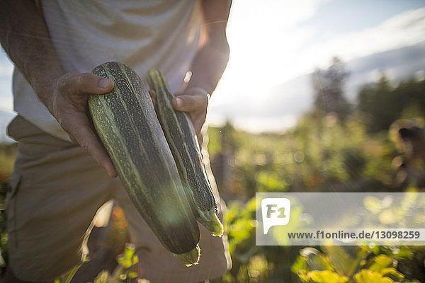 Mann hält Zucchini in der Mitte  während er im Gemeinschaftsgarten steht Mann hält Zucchini in der Mitte, während er im Gemeinschaftsgarten steht