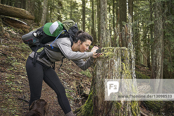Woman photographing tree stump with smart phone in forest