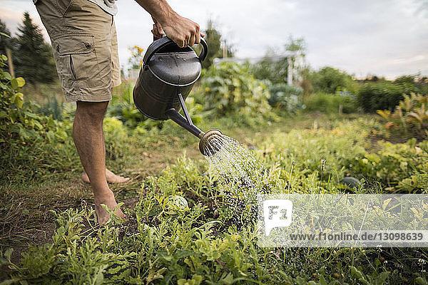 Niedriger Teil des Menschen bewässert Pflanzen im Gemeinschaftsgarten Niedriger Teil des Menschen bewässert Pflanzen im Gemeinschaftsgarten