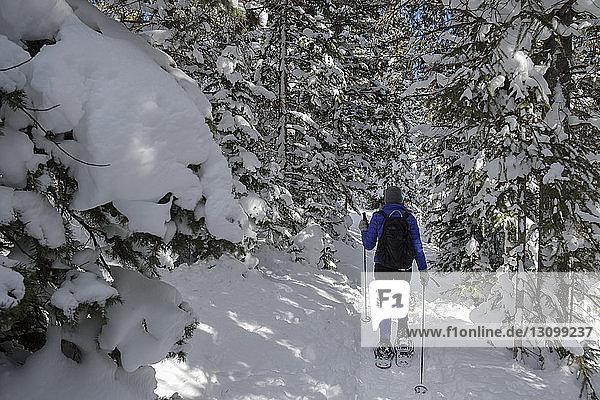 Rückansicht einer Frau  die auf einem schneebedeckten Feld im Wald wandert