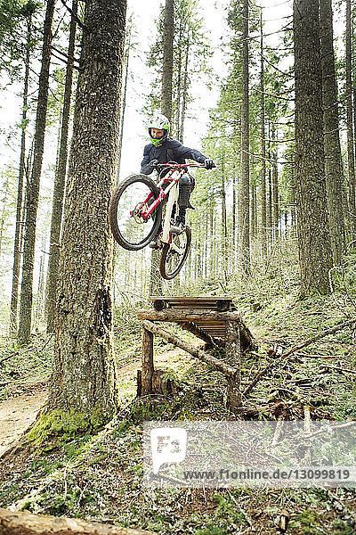 Low angle view of cyclist jumping with bicycle in forest