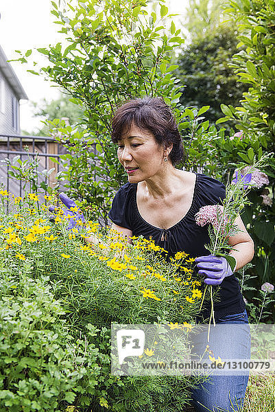 Senior woman examining flowers in garden