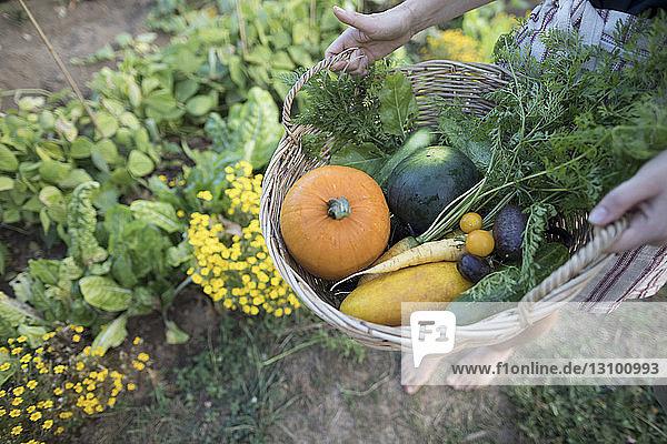 Niedriger Abschnitt einer Frau  die Gemüse in einem Korb hält  während sie im Gemeinschaftsgarten steht Niedriger Abschnitt einer Frau, die Gemüse in einem Korb hält, während sie im Gemeinschaftsgarten steht