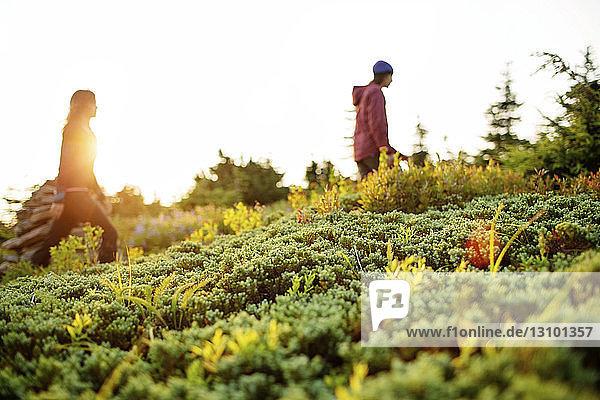 Seitenansicht eines Paares  das inmitten von Pflanzen gegen den klaren Himmel wandert