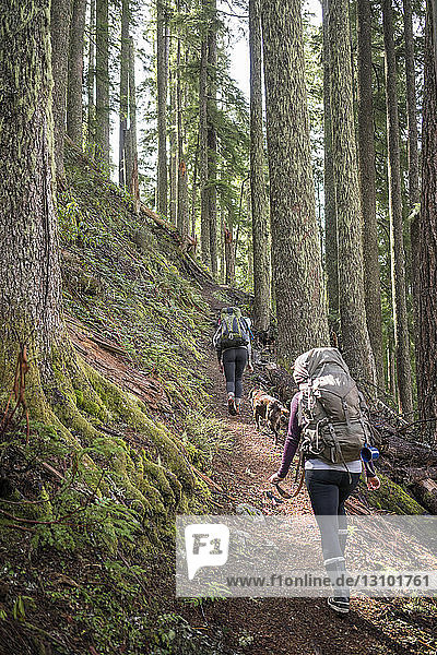 Rear view of women hiking with dog amidst trees on mountain