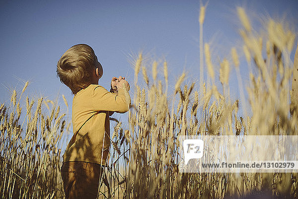 Low angle view of boy looking up while standing amidst wheat field