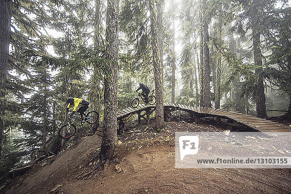 Männliche Freunde fahren Mountainbike auf einer Promenade im Wald