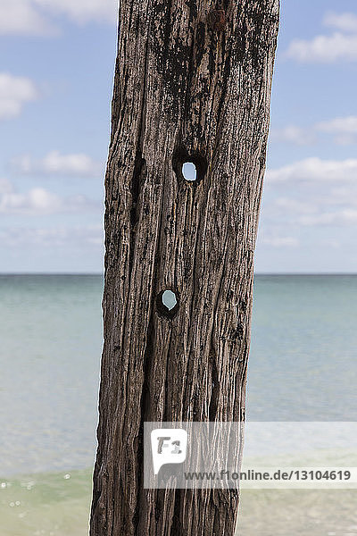 Holes in driftwood post on beach