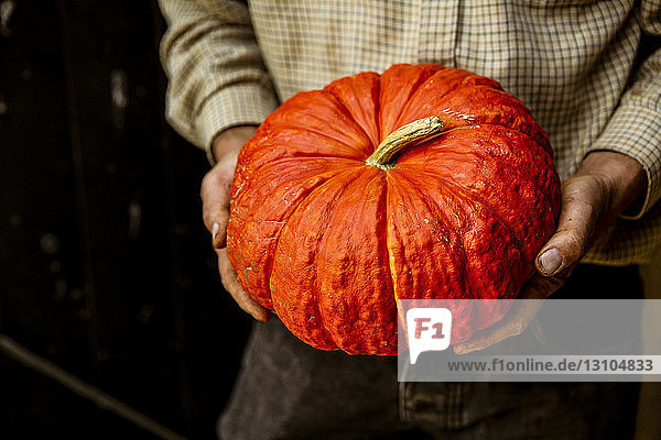 High angle close up of farmer holding red Cinderella pumpkin.