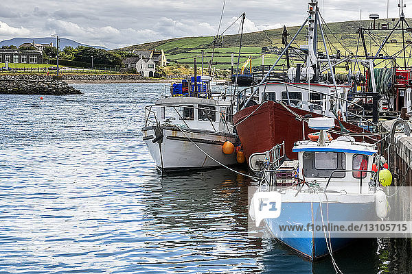 Colourful fishing boats in a harbour; Dingle  County Kerry  Ireland