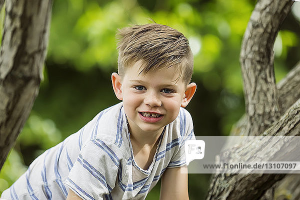 Young boy climbing in a treee and smiling for the camera while spending time in a park; Edmonton  Alberta  Canada