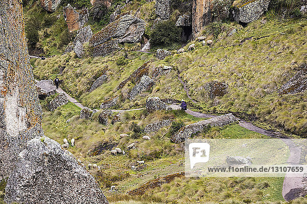 Los Frailones  tourists on a trail and sheep grazing on a hillside  Cumbemayo; Cajamarca  Peru