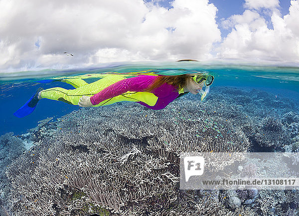 A woman in a wetsuit snorkeling over a hard coral reef; Indonesia