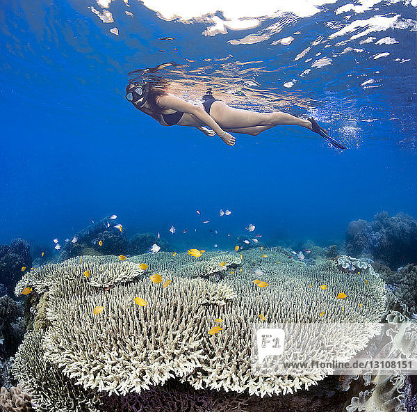A girl snorkeling over table coral and reef fish off Apo Island; Philippines
