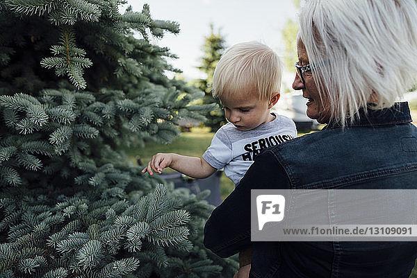 Rückansicht der Großmutter  die den Enkel trägt  während sie auf dem Bauernhof bei Kiefern steht