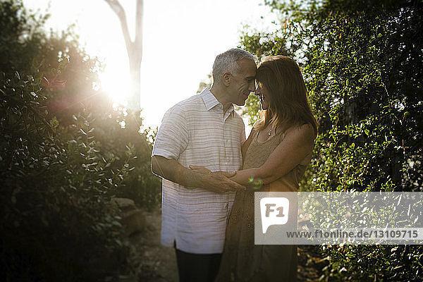 Romantisches älteres Ehepaar,  das sich bei Sonnenuntergang im Park ansieht