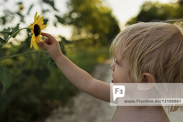 Close-up of boy touching sunflower while standing on field