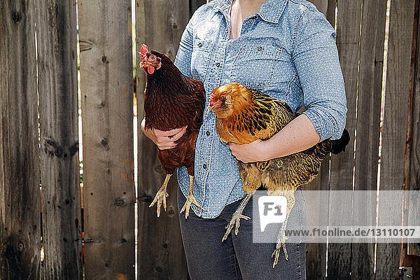 Mitte einer Frau  die Hühner gegen einen Holzzaun hält